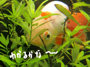 かくれんぼマル07.JPG